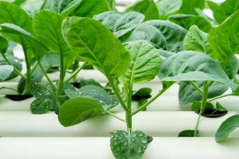 安定した供給が可能な農業
